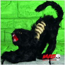Life Size Black Witches Cat - Skeleton Zombie Halloween Horror Decoration Prop