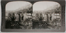 Keystone Stereoview of Drying Cod Fish in Vardo, NORWAY from the 1920's 400 Set