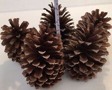 "5 PINE CONES Natural Large 5"" - 5 3/4 "" High ~ 3 1/2 ""- 3 3/4"" wide ~ Crafts"