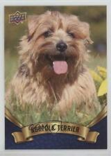 2018 Upper Deck Canine Collection Blue Norfolk Terrier #117 0n8