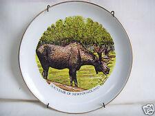 Souvenir Of NEWFOUNDLAND CANADA MOOSE PLATE LIVERPOOL Ironstone POTTERY ENGLAND