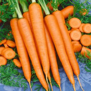 Tendersweet Carrot Seeds 1000+ Vegetable Garden NON-GMO USA SELLER FREE SHIPPING