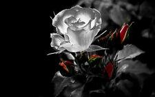 Incorniciato stampa-Neon Rosa Bianca con Fiori rosso (PICTURE POSTER DAISY LILY ARTE)