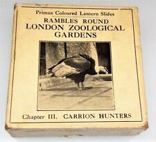 Rambles Round London Zoological Gardens - Chapter 3 - Magic Lantern Slides c1900