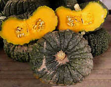 Pumpkin IRONBARK-Pumpkin Seeds-DELICIOUS FLESH-LONG KEEPER-15 FRESH SEEDS.