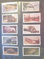 1958 Horniman's Tea WILD ANIMALS Zebra Yak.Trade full set 48 cards like tobacco