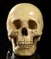 Realistico teschio umano in resina con teschio modello Ornament Decor Yellow