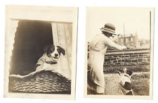 Pet Dog with Owner - 2x Vintage Photographs c1930