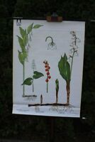 Carte à Rouler Schulwandkarte Murale Muguet Plante Land / Etat Schulkarte
