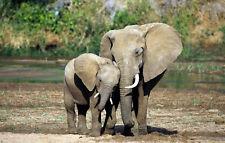 Enmarcado impresión bebé elefante con su madre (arte africano de Animales Salvajes Foto)