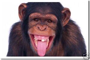 Chimpanzee Laughing - Animal Nature Wildlife NEW POSTER