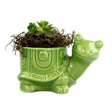 """Ceramic White Turtle Pot with 2.25"""" Potted Succulent"""
