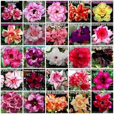 ADENIUM OBESUM DESERT ROSES DOUBLE / TRIPLE FLOWERS MIXED ASSORTED 20 SEEDS  #I