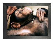 Monkey #8 Poster Funny Wild Animal Picture Mammals Photo Ape Chillout Relax