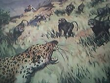 ephemera 1957 picture vengance of the baboons