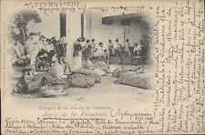 SPAIN JEREZ DE LA FRONTERA 1900 COMPRA DE LA UVA EN LA VENDIMIA FOT. GONZALEZ 15