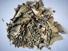 ( 100 ) - Fossil Shark Teeth - lot