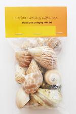"15 Hermit Crab Shells Assorted Natural Seashells SMALL 3/4""-2"" Beautiful Set"