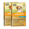 Advocate for Medium Dogs 4 to 10kg (Aqua) (12 pipettes) Dog Dogs Pet Pets