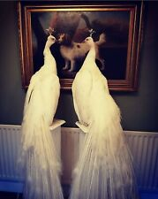 More details for stunning taxidermy white peacock interior design swan