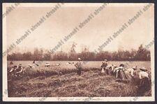 MONDINE 283 MONDARISO RISO RISAIA AGRICOLTURA VERCELLI Cartolina viagg. 1929