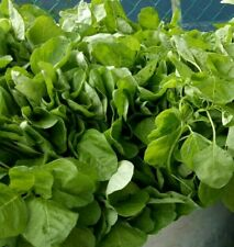 open pollinated vegetable seeds : Green spinach