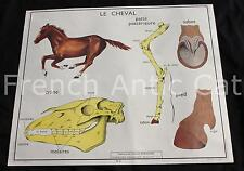 Ancienne affiche science Rossignol 5 6 Lapin Cheval squelette crâne patte sabot