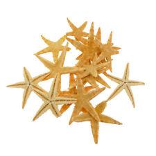 20pcs 3cm-5cm Small Natural Starfish Sea Star Crafts Decor For Micro-landscape