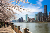 Blooming Trees on Roosevelt Island New York City Photo Art Print Poster 18x12