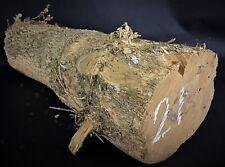 A tourner ou sculpture/ Rondin, billette, bûche de Buis,coupé 2019,D13/L37/2.9kg