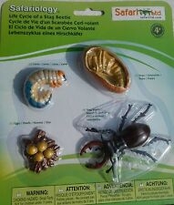 STAG BEETLE LIFE CYCLE - 4 stages learning resource - plastic insect / bug