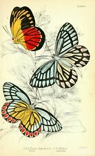 Vintage Butterfly Print, Naturalists Library Natural History Repro Art Picture 6