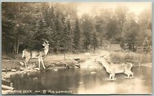 NATIVE DEER 1939 VINTAGE REAL PHOTO POSTCARD RPPC PHOTOMONTAGE collage montage