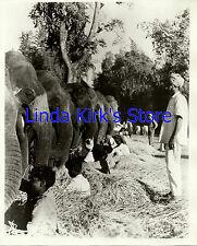 "Hunter Elephants Photograph ""I Search For Adventure"" Squad Of Kumkis"