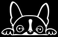 "Boston Terrier Peeking Over 6"" White Vinyl Car Truck Decal Sticker Dogs Rescue"