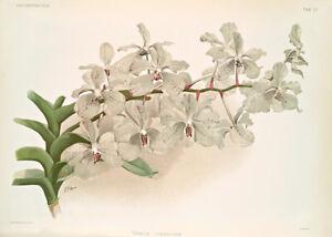 Vanda Ccerulea By Joseph Sander Floral Print