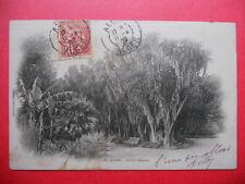 ALGER  :  Le Jardin d'Essais.........Précurseur......VO.1902.