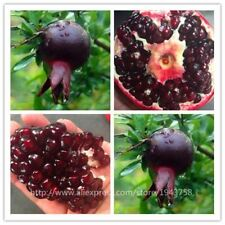 30 pcs Black Pomegranate seeds home plant Delicious fruit seed melon very big &