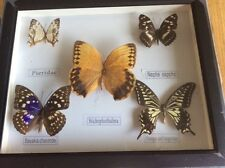 FRAMED COLLECTION  5 BUTTERFLIES MOTHS REAL SPECIMENS