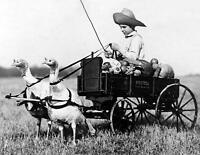 "1909 Cute Boy & Turkey Drawn Wagon Old Vintage Photo Picture 8.5"" x 11"" Reprint"