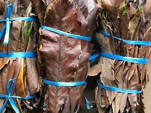 4 OZ Southern California Organic Garden Loquat Leaves Tea Dried