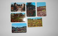 LOT OF 6 NEWARK  NY NEW YORK   POSTCARDS