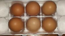 6 Fertile Chicken Hatching Eggs Assorted Poultry Barn Yard Mix Priority Shipping