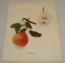 1921 Antique Print/WORDEN SECKEL/From Pears of New York, by Hedrick