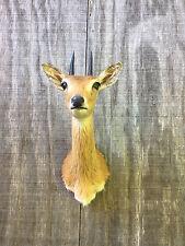 African-Oribi/Pygmy Antelope Sho.Mt. Africa Hunting Lodge Taxidermy Safari Decor
