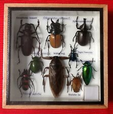 EXOTIC WATER BUG 9 INSECT DISPLAY TAXIDERMY ENTOMOLOGY CICADA BEETLE INSECTS