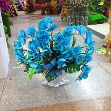 100 pcs Blue Phalaenopsis Orchid Flower Seeds, Rare Butterfly Orchid Seeds #02