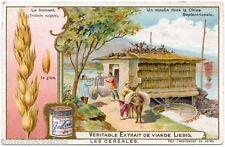 CHROMO. LIEBIG. LES CéRéALES . GRAIN. LE FROMENT .  S 781 . 1904