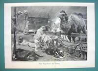 CIRCUS Life Mother Baby Camel Parrots Money Sleeping Dog - VICTORIAN Era Print