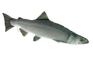 Fisch Kissen Lachs  Angler Geschenk Kuscheltier Kopfkissen der Königslachs 90cm